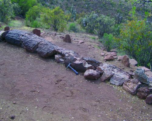 Imagen del monumento Bosque Petrificado y yacimiento de huesos de dinosaurio