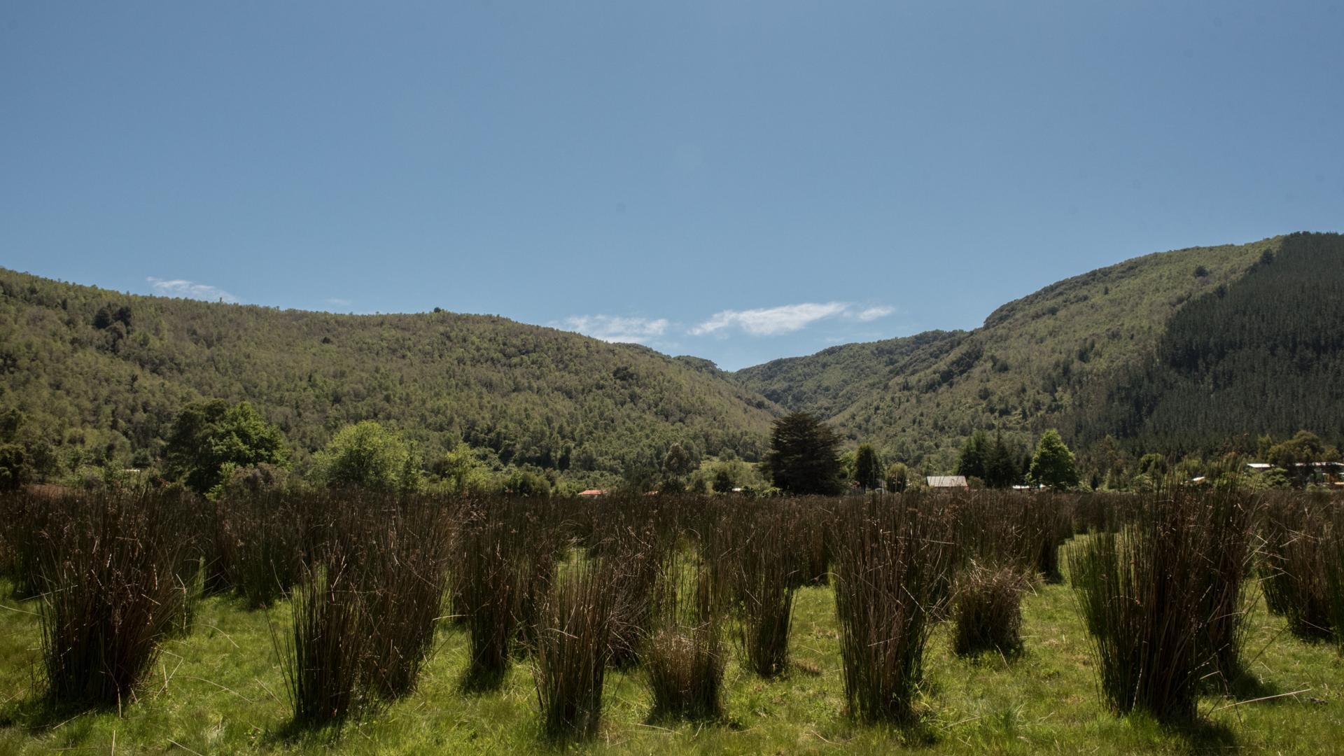 Imagen de Se declara Santuario de la Naturaleza El Natri en la Región del Biobío