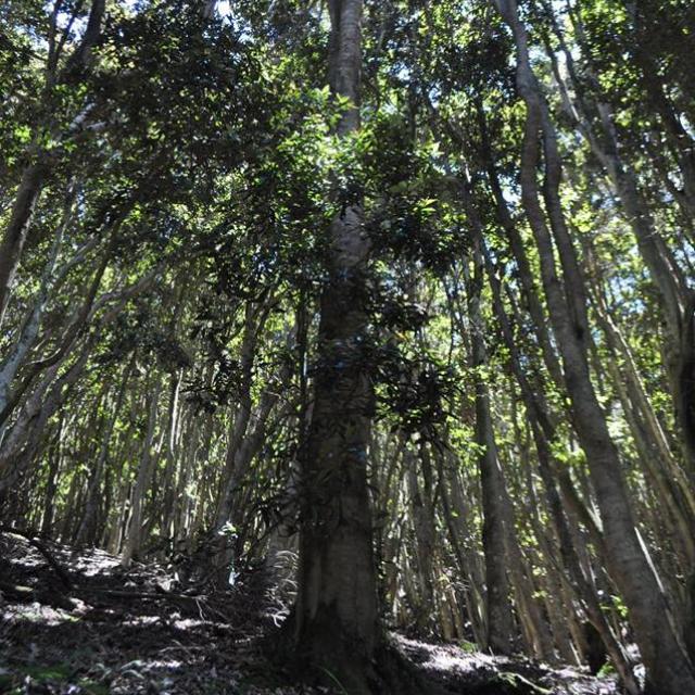 Imagen del monumento Quebrada de Córdova