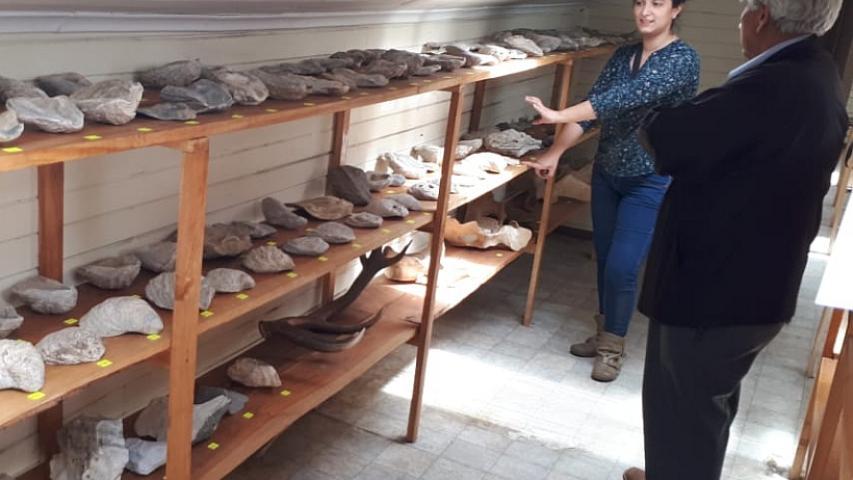 Imagen de CMN y Aduanas clasificaron fósiles y otras especies decomisadas en la Región de Aysén