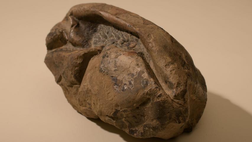 Imagen de Investigador del MNHN forma parte del equipo que encontró huevo gigante de reptil marino