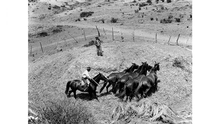 Trilla a yegua suelta, 1946