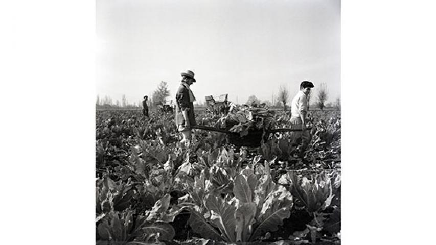 Cosecha de hortalizas