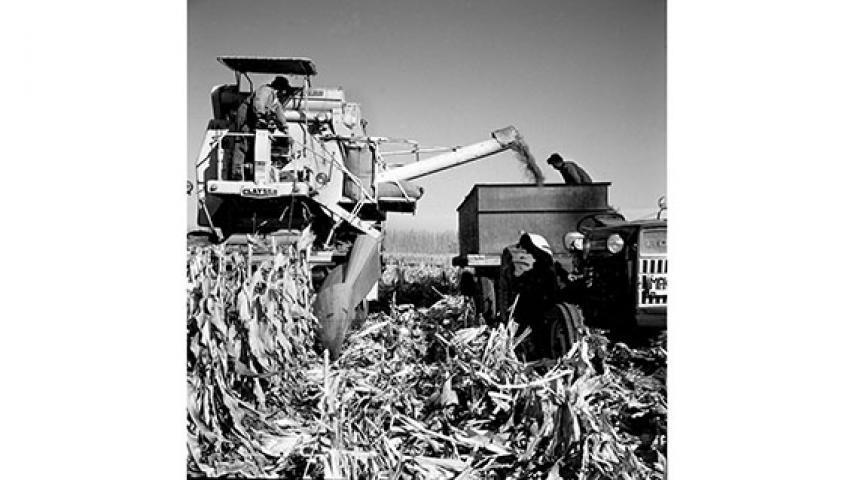 Trilla de maíz con maquinaria