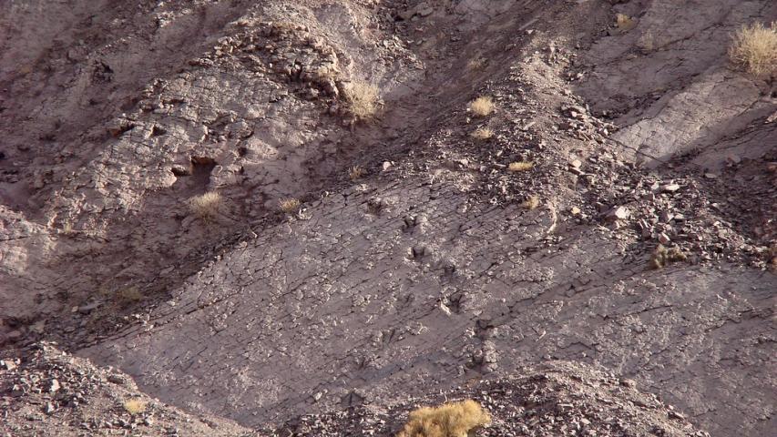 Imagen de Cartografía describe presencia de fósiles con más de 10 millones de años en Arica