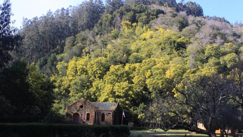 Imagen de Consejo de Monumentos aprueba amplia zona de protección para Monumento Histórico ex Central Chivilingo