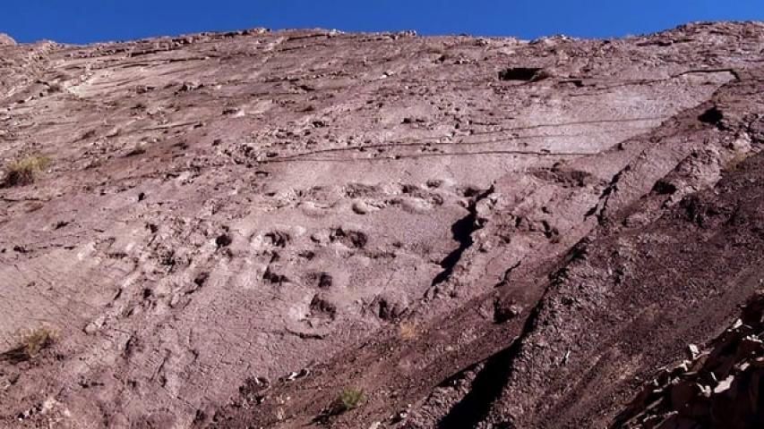Imagen de Paleontología: Chacarillas