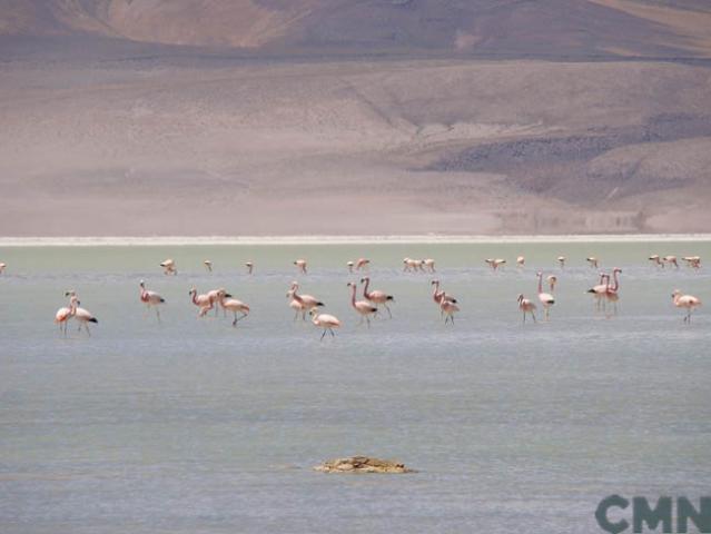 Imagen del monumento Salar de Huasco
