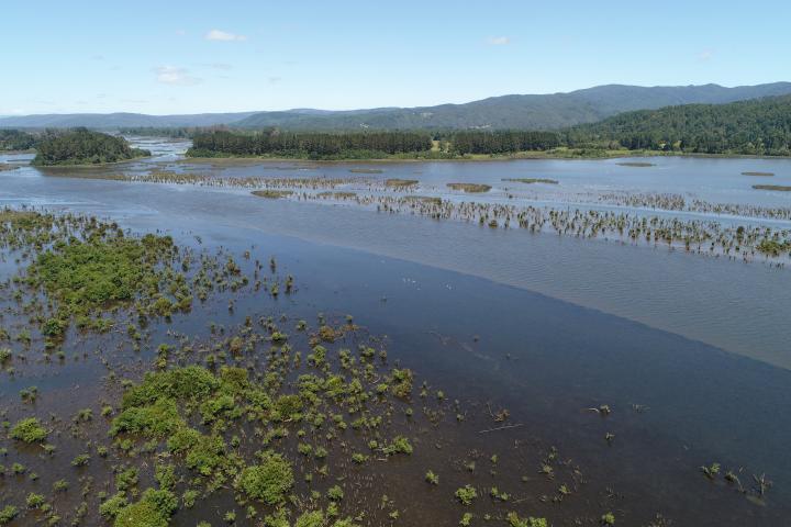 Imagen del monumento Zona húmeda de los alrededores de la ciudad de Valdivia