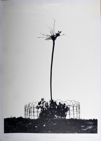 Imagen del monumento Fotografías del Museo de Bellas Artes