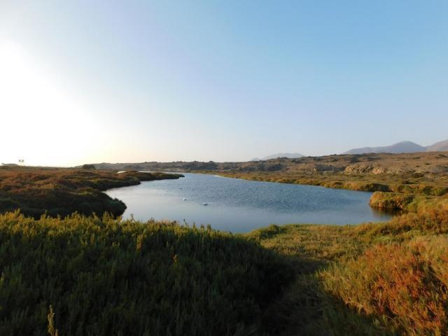 Imagen del monumento Humedal Costero Carrizal Bajo