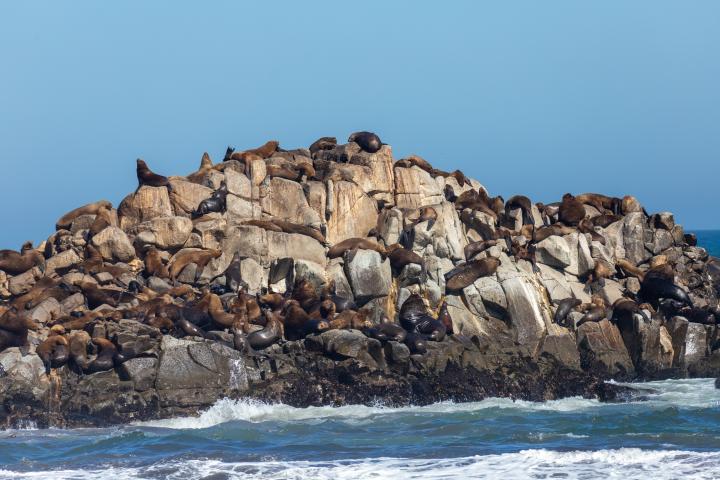 Imagen del monumento Los islotes Lobería y lobería Iglesia de Piedra