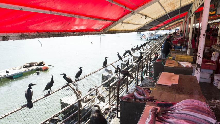 Imagen del monumento Feria fluvial de Valdivia y su entorno